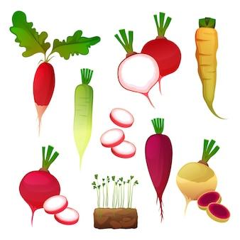 Produits alimentaires à base de légumes de radis, assaisonnement pour salade et ingrédient de cuisine