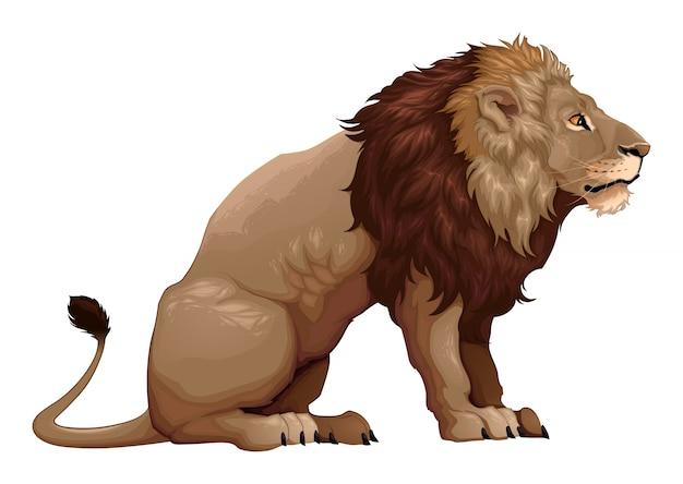 Profil D Un Lion Assis Illustration Dessin Animee Vectorielle