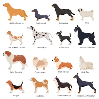 Profile dogs icon set