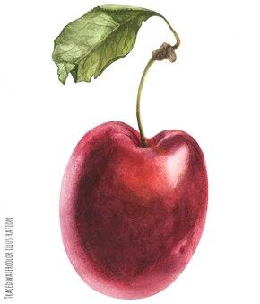 Prune-cerise rouge fraîche