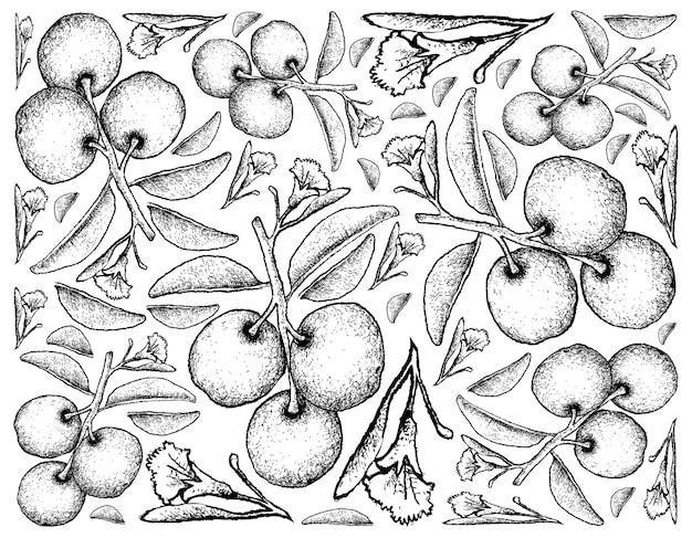 Prunes de suif frais dessinés à la main