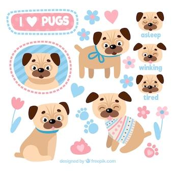 Pugs drôle avec un style adorable