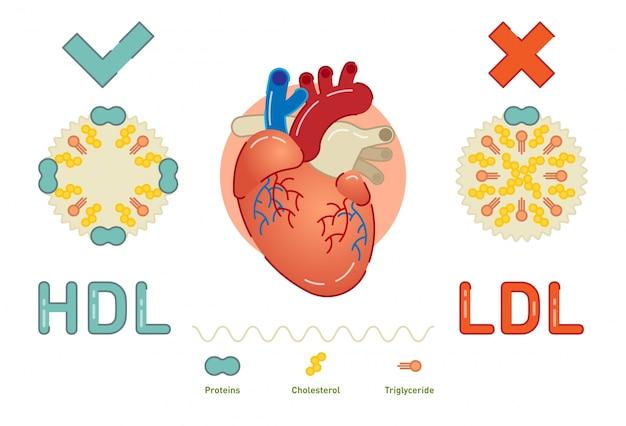 Qu'est-ce que la lipoprotéine