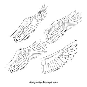 Quatre ailes desséchées