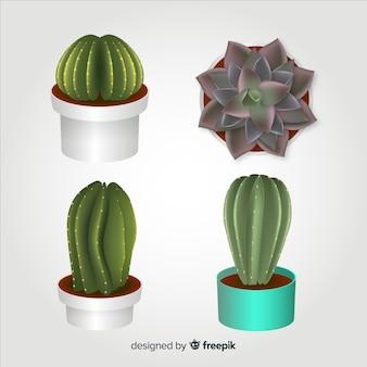 Quatre cactus réalistes illustrés, isolés