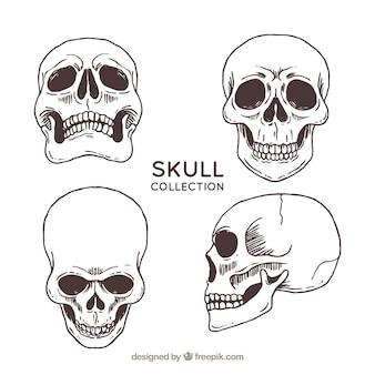 Quatre crânes dessinés à la main