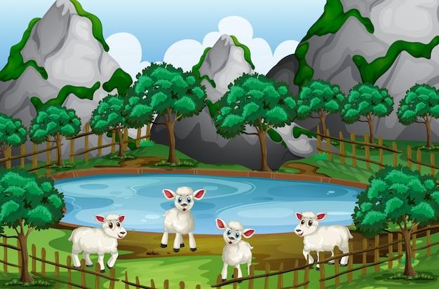 Quatre moutons au bord de l'étang