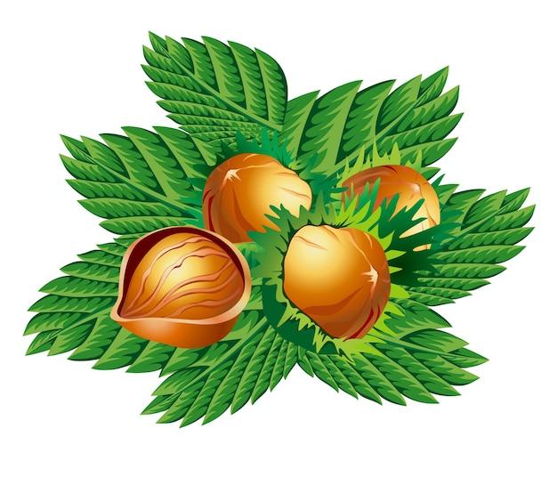 Quatre noix avec des feuilles isolées sur blanc