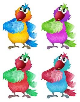 Quatre perroquets colorés