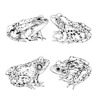 Quatre positions de grenouilles en image vectorielle de forme