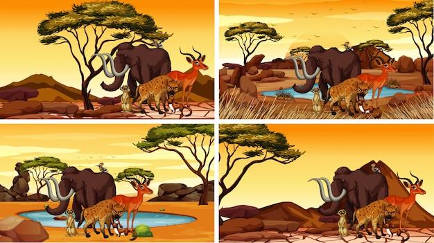Quatre scènes avec des animaux africains