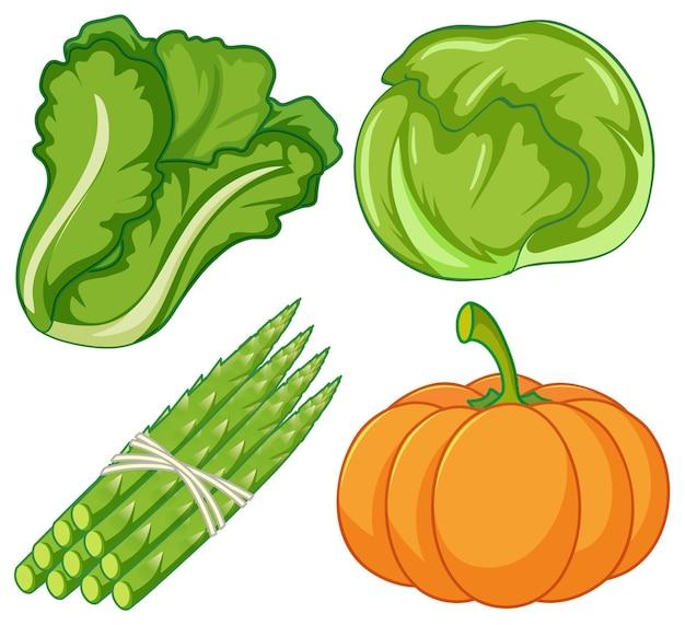 Quatre types de légumes sur fond blanc