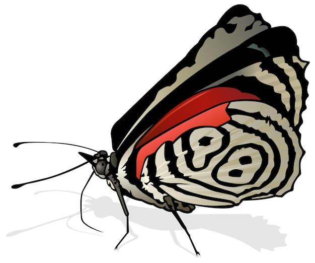 Quatre-vingt-huit papillons diaethria négligencea