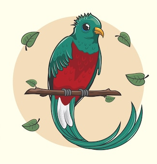 Quetzal bird cartoon cute