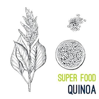 Quinoa. super nourriture dessinée à la main