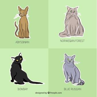 Races de chat étiquettes