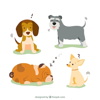 Races de chien illustration