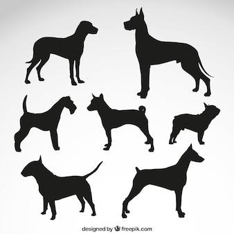 Races de chien silhouettes