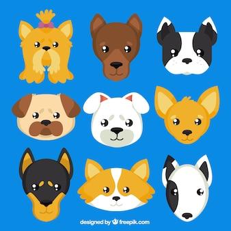 Races de chiens avatars