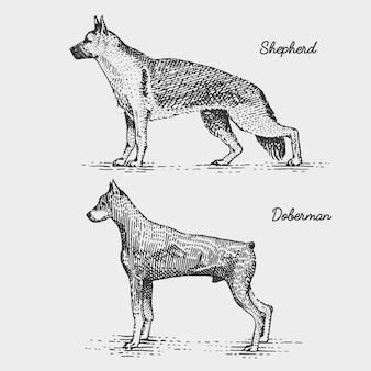 Races de chiens gravées, illustration dessinée à la main dans le style scratchboard gravure sur bois