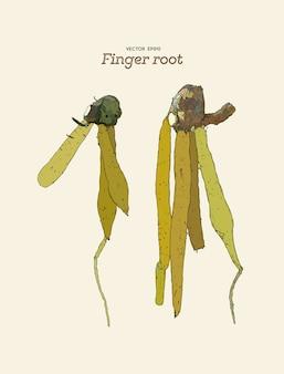 Racine du doigt