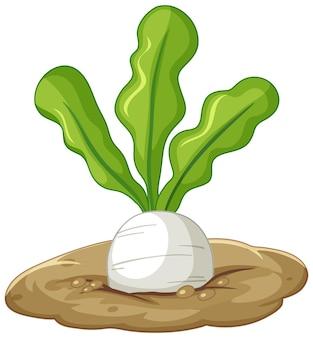 Racine de radis blanc dans le style de dessin animé de sol isolé