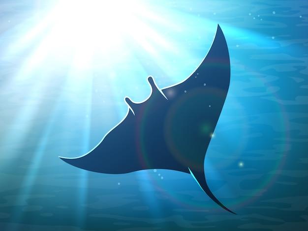 Raie manta noire dans l'océan