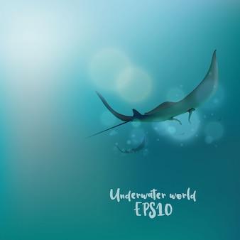 Les raies sous l'eau
