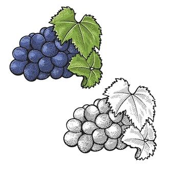 Raisin fruits vin dessin à la main