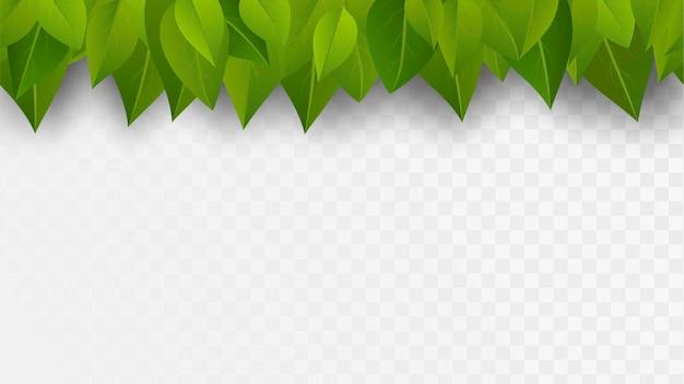 Rangée Transparente De Feuilles Vertes Vecteur Premium