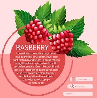 Rasberry et la conception de texte
