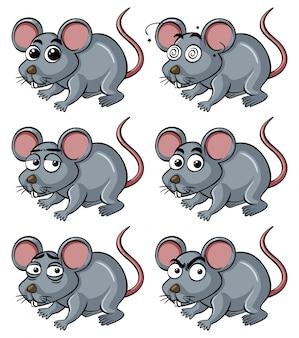 Rat avec différentes expressions faciales