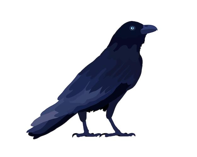 Raven isolé sur blanc