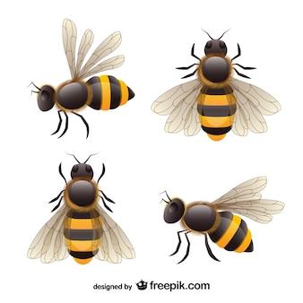 Réaliste vecteur abeille ensemble