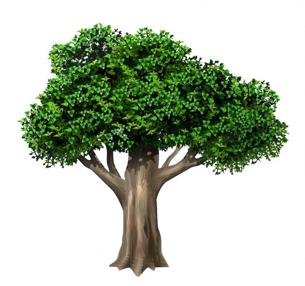 Réaliste vieux grand chêne en vecteur