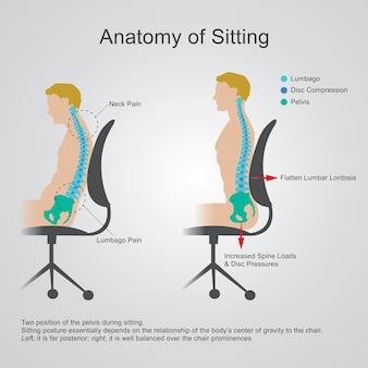 La région lombaire est parfois appelée la colonne vertébrale inférieure