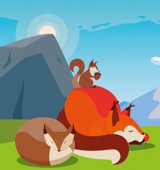 Renard et écureuil sur la nature