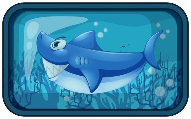 Un requin kappy dans l'aquarium
