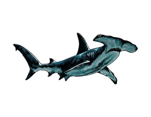 Requin marteau aquarelle sur blanc