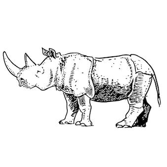 Rhinocéros dessinés à la main.