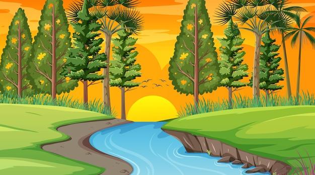 Rivière à travers la scène de la forêt au coucher du soleil