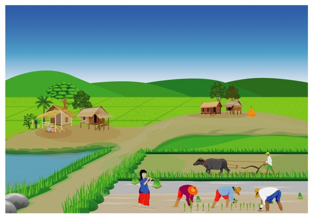 Riz de transplantation de paysan ensemencement dans la conception de vecteur de rizière