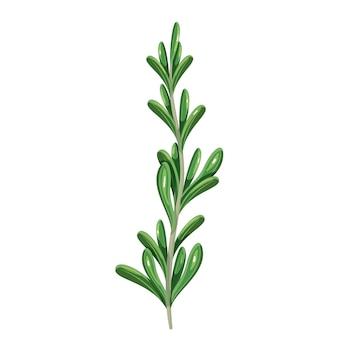 Romarin vert, nourriture végétarienne, menu sain. épices d'herbes, salade et repas. illustration vectorielle isolée en style cartoon.
