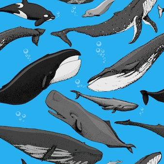 Rorqual bleu orque épaulard cachalot à bosse baleine boréale