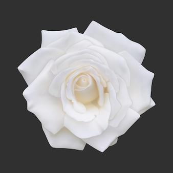 Rose blanche réaliste