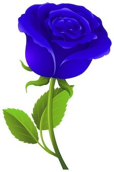Rose bleue sur tige verte