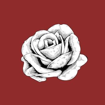 Rose dessin icône de vecteur nature fleur sur fond rouge