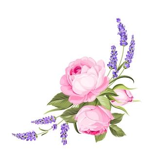 Rose en fleurs sur fond blanc
