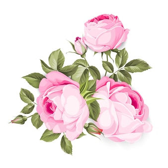 La rose en fleurs.