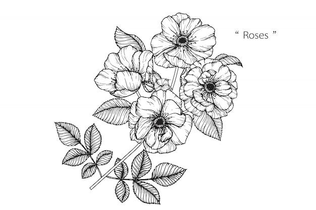 Rose leaf et dessins de fleurs. illustrations botaniques dessinés à la main vintage. vecteur.